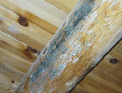 di wilayah tropis, proses dekomposisi sangat cepat terjadi sehingga aplikasi pengawetan kayu menjadi sangat vital.