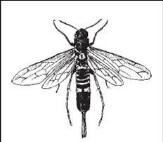 aplikasikan cara membasmi kumbang bubuk kayu.