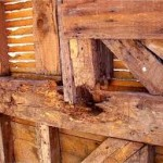 Kerusakan kayu parah akibat kumbang bubuk kayu