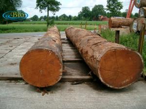 Kayu Merbau adalah salah satu jenis kayu di Indonesia yang boleh dikomersilkan.