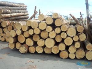 Aplikasikan solusi efektif mengawetkan kayu pinus dengan bahan pengawet yang ampuh
