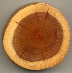bagian luar disebut sapwood sedang yang dalam disebut hardwood