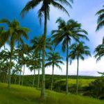 kayu-kelapa-cool