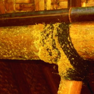 pengawetan-pada-bambu
