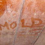 obat anti jamur kayu pinus kualitas internasional