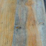 Jamur kayu blue stain