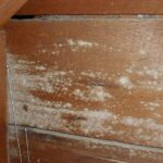 Jamur permukaan kayu Sumber Bioindustries