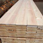 Rayap pada kayu pinus
