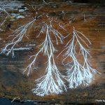 jamur pelapuk kayu iii