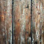 kayu lapuk karena jamur