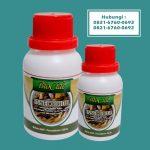 racun rayap (2)