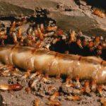 sistem sarang rayap tanah 2
