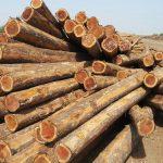 Proses pengawetan kayu 3