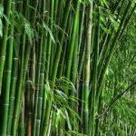keuntungan menggunakan bambu